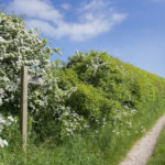 The public bridleway leaving from the Glamping site