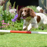 Our dogs always love the agility course