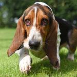 Dog photo 1