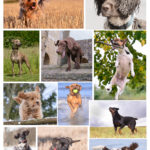 Montage dogs-1