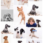 Montage dogs-2
