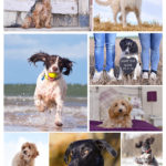 Montage dogs-3