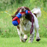 Dog Training 52