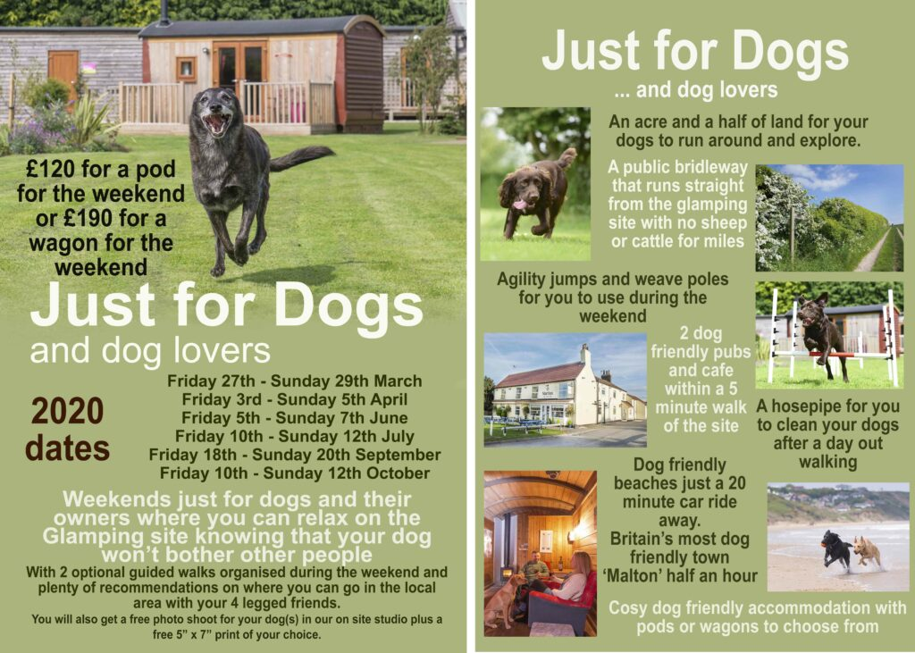 Just for dogs advert 2020 website